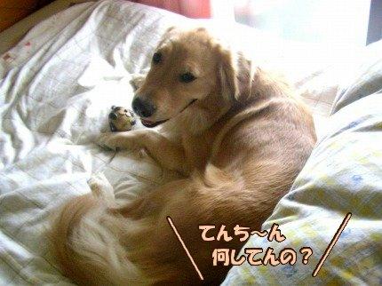 SANY0050_20091111061136.jpg