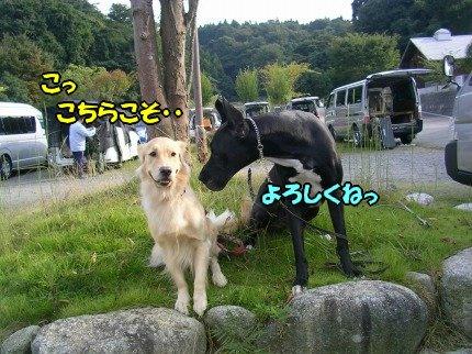 SANY0052_20090928103125.jpg
