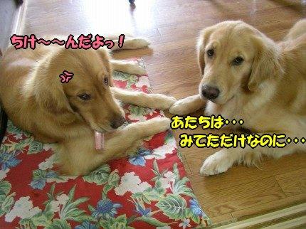 SANY0053_20091008123434.jpg