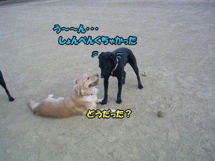 SANY0061_20091023092216.jpg