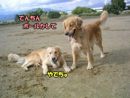 SANY0069_20091105061912.jpg