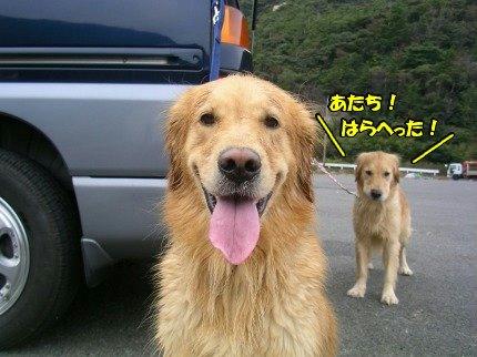 SANY0071_20091027103346.jpg