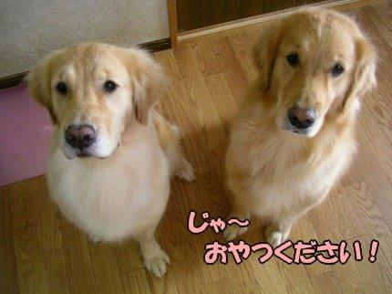 SANY0082_20091017122143.jpg