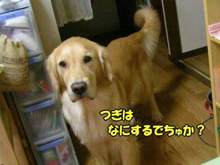SANY0088_20090929101553.jpg