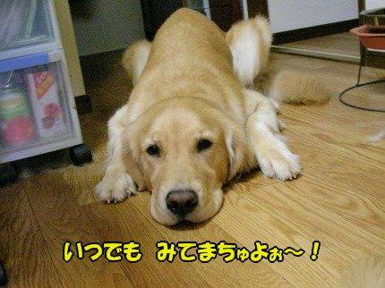 SANY0091_20090929101525.jpg
