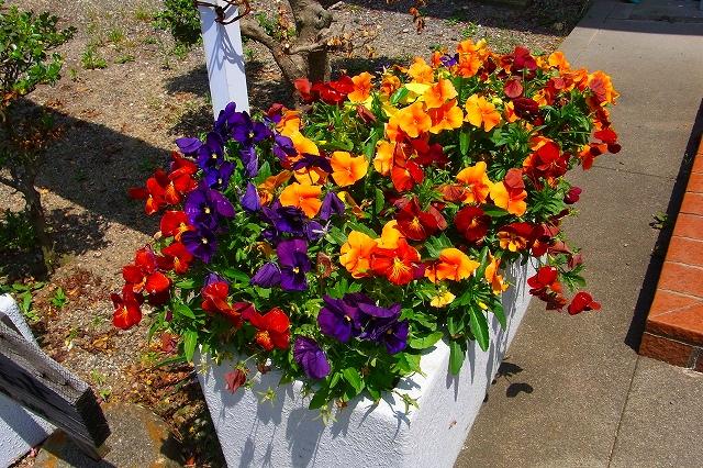 110505-flower05.jpg