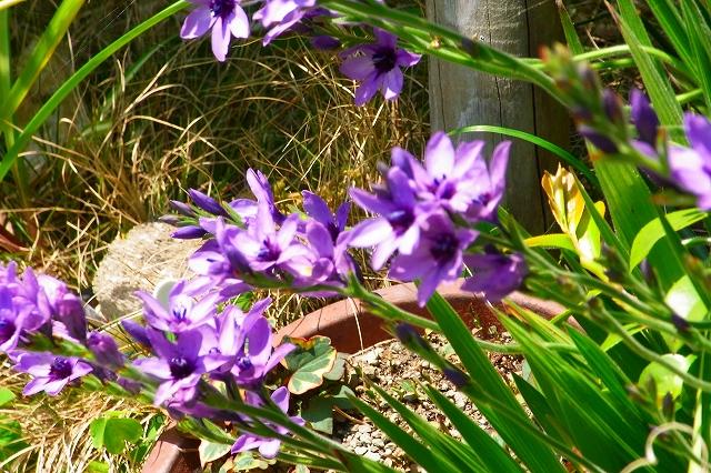 110505-flower03.jpg
