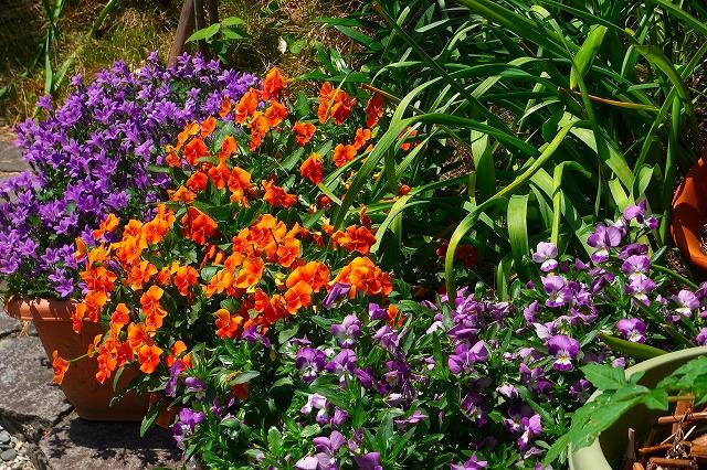 110505-flower04.jpg
