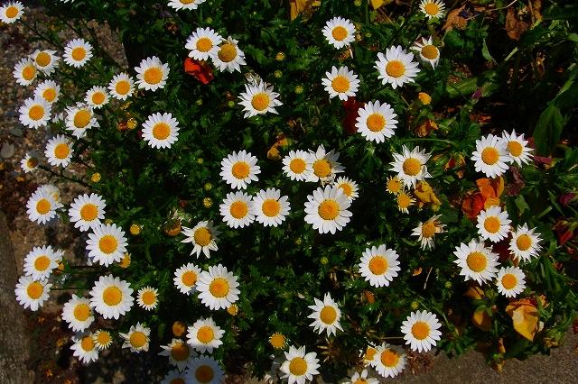 110505-flower07.jpg