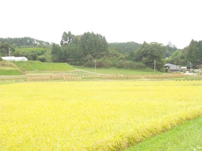 入谷地区の豊作