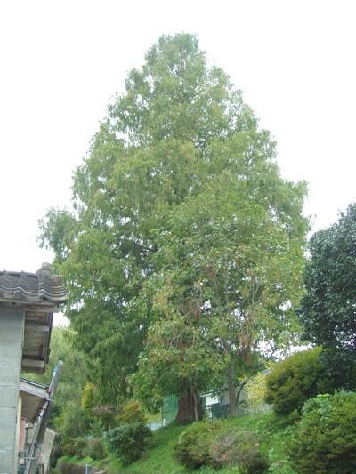 入谷小学校の木