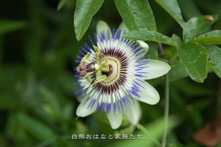 20110531-_MG_6985.jpg