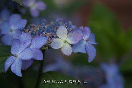 20110531-_MG_6989.jpg