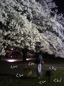 20070418150010.jpg