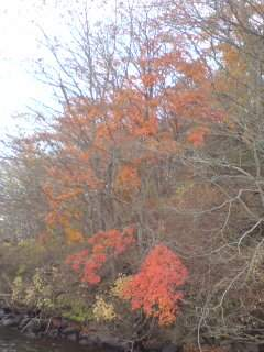 20111113 琵琶ヶ崎 紅葉