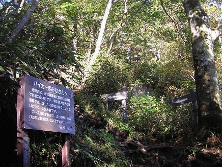 こっからは岩ゴロの急登です