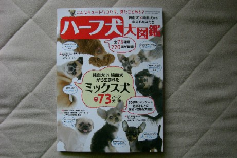 ハーフ犬大図鑑
