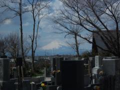 お墓から富士山