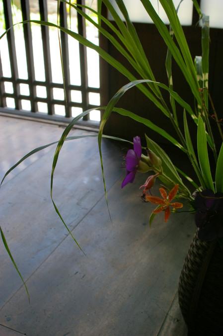 屋敷の活花