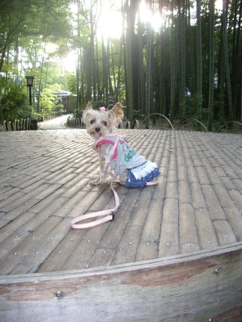 竹を背景にお写真です