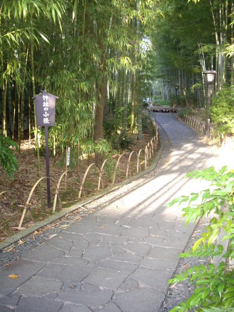今度は竹林を歩きます