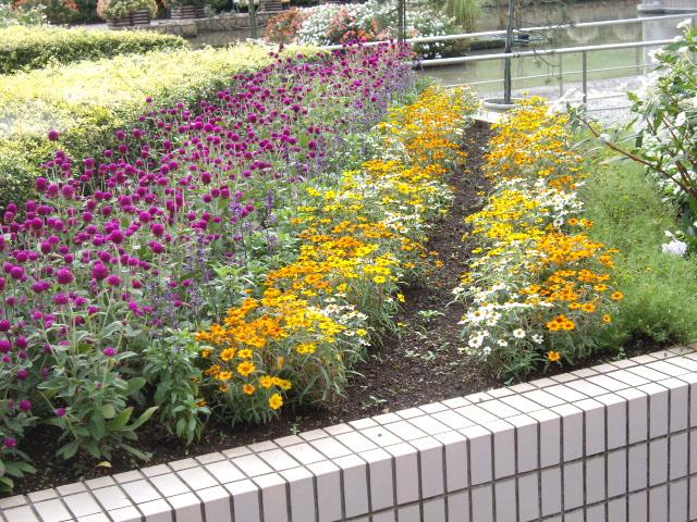 花壇のお花達