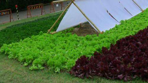つるま公園野菜