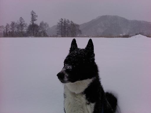 冬の農耕地(コース下見)
