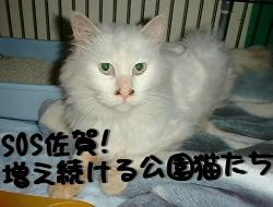 SOS佐賀! 増え続ける公園猫たち