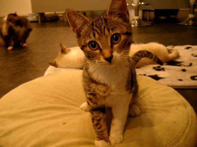 愛知県豊田市Hさま保護猫