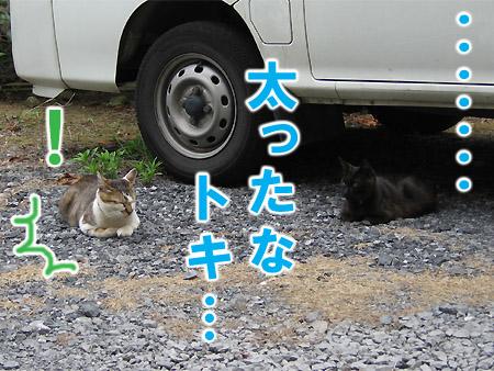 20071111_03.jpg