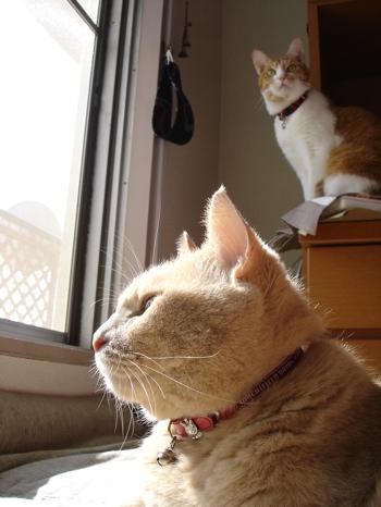窓開けて2