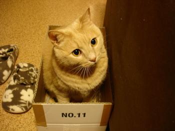 箱入り娘1