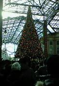 TDLのクリスマスツリー