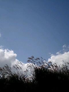 20071120190749.jpg