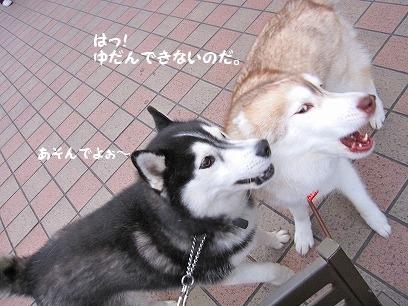 IMG_0237_20090922102841.jpg