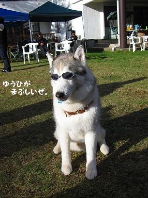 IMG_1502_20091019230709.jpg