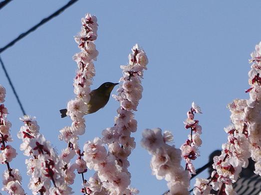 被災地にも暖かな春が訪れますように
