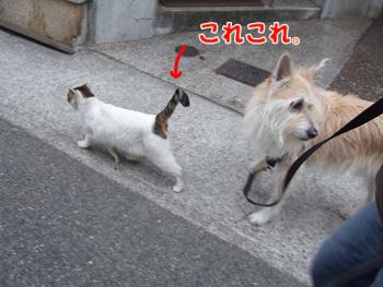2011_02070037.jpg