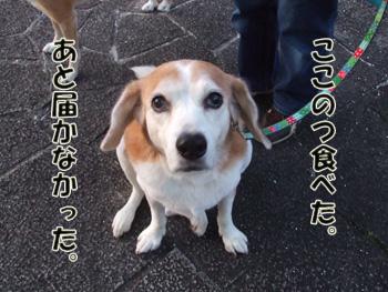 2011_11140029.jpg