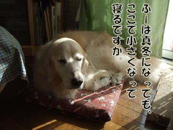 2011_11160007.jpg