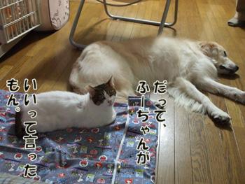 2011_11160032.jpg