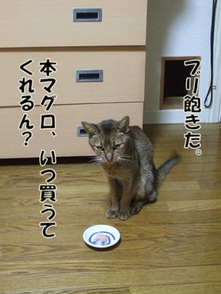 2011_11190038.jpg