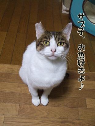 2011_11210008.jpg