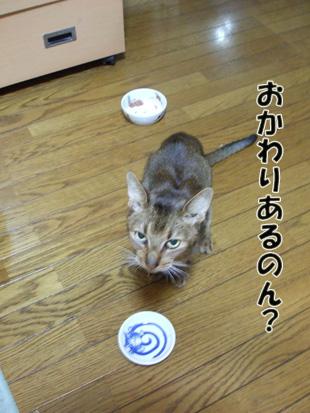 2011_11220029.jpg