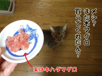 2011_11220081.jpg