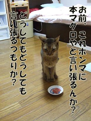 2011_11220093.jpg