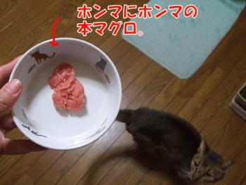 2011_11220095.jpg
