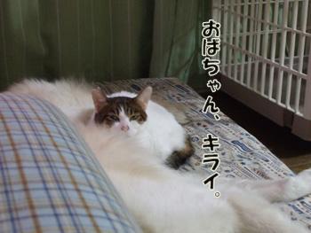 2012_01180062.jpg