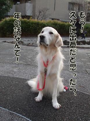 2012_01220010.jpg